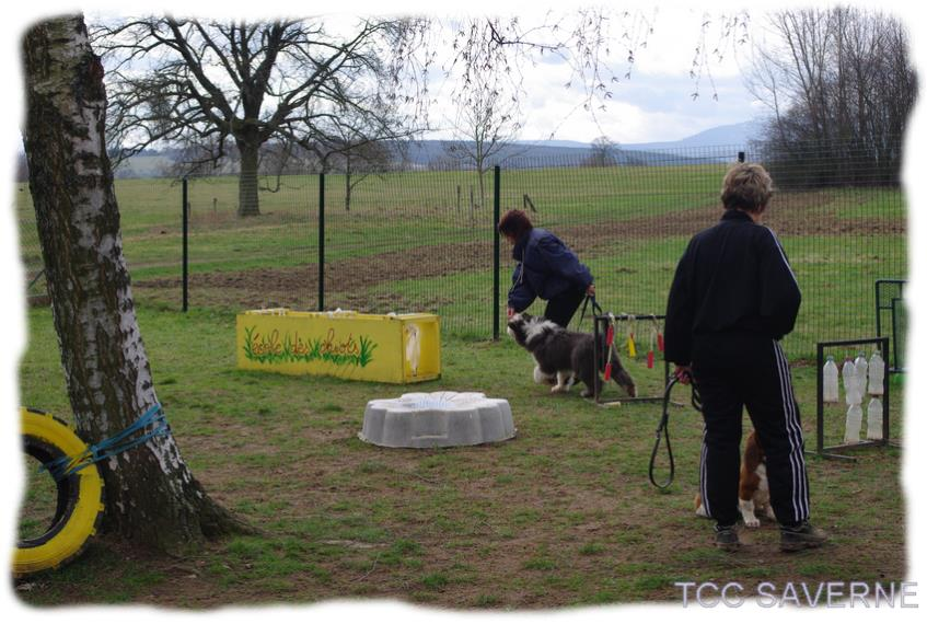 Tcc Saverne Training Club Canin De Saverne